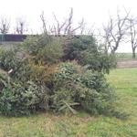 Weihnachtsbaumverbrennen 2014